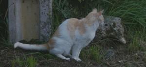 Micción normalizada en el gato doméstico © Etología Veterinaria Asturias